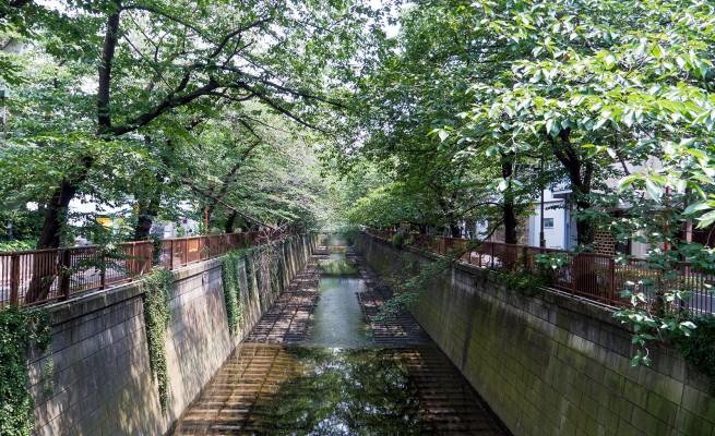 Meguro River. Photo: Nayalan Moodley