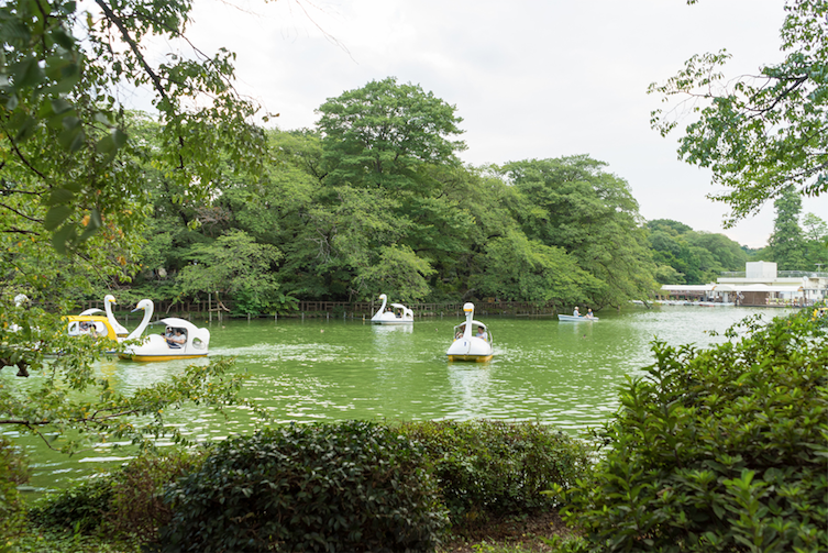 Swan boats on Inokashira Pond. Photo: Nayalan Moodley