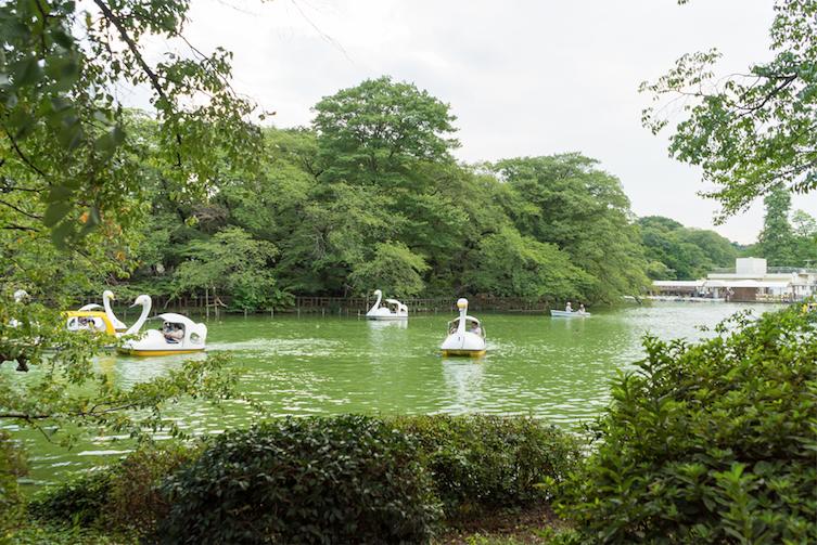 Swan boats on Inokashira Pond. Photo: Nayalan Moodley