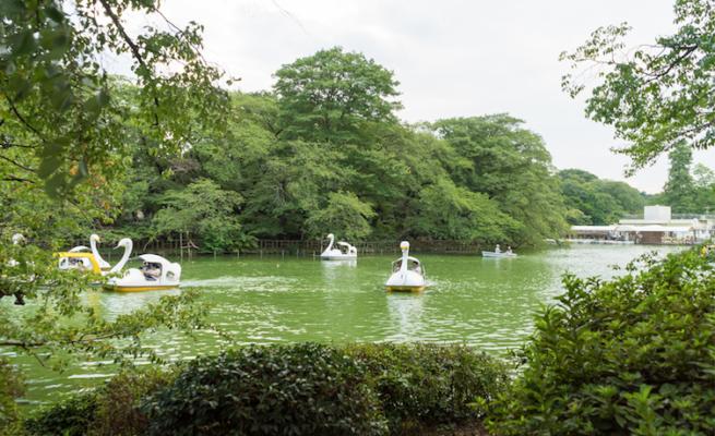吉祥寺-井之頭公園
