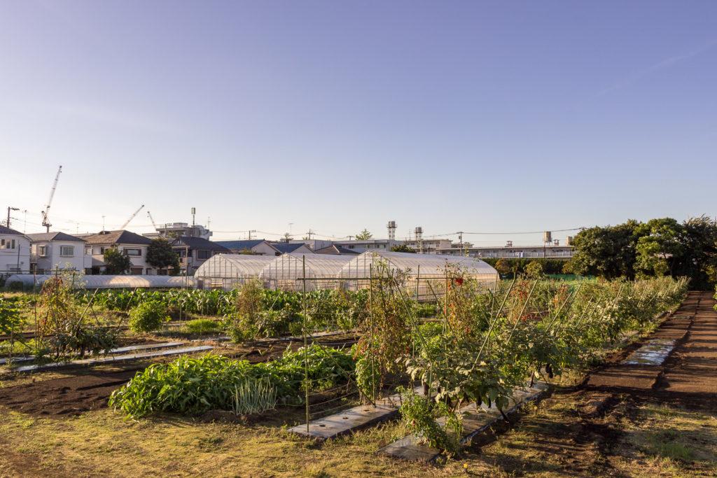 武蔵境-東京-農園