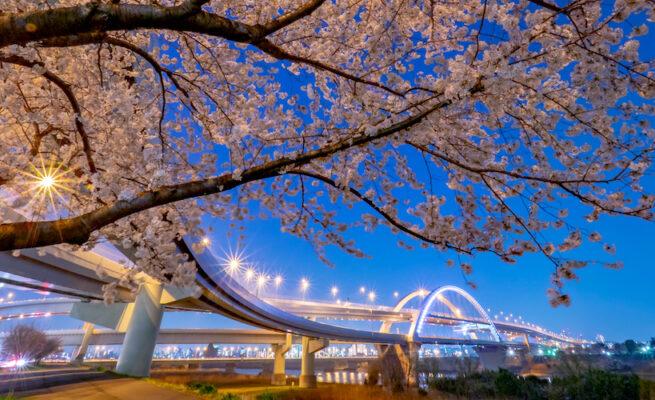 iStock-1132989439-Goshiki-Sakura-Bridge-over-Arakawa-River-足立区-夜の桜と荒川の五色さくら橋