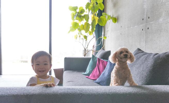 iStock-827167452-小狗-小孩-日本養寵物